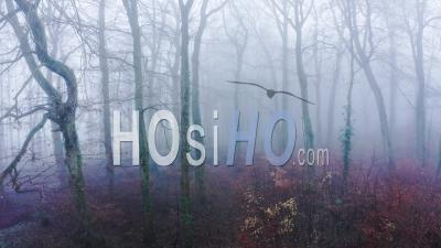 Aerial Drone Video Of Trees In Thick Fog Weather Conditions, Mysterious Woodlands Forest In Mist And Fog, Beautiful Nature Landscape Scenery In England, United Kingdom