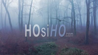 Vue Par Drone Vidéo De Bois Dans Des Conditions Météorologiques Brumeuses Brumeuses Avec Des Arbres D'automne Dans Des Forêts Mystérieuses Dans La Brume Et Le Brouillard, Humeur Atmosphérique Hantée Effrayante, Beau Paysage De Paysage Naturel En Angleterre, Royaume-Uni