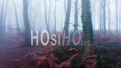 Vue Par Drone Vidéo D'arbres Dans Des Conditions Météorologiques De Brouillard épais, Forêt Mystérieuse Dans La Brume Et Le Brouillard, Beau Paysage De Nature En Angleterre, Royaume-Uni