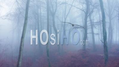Vue Par Drone Vidéo De Bois Dans Des Conditions Météorologiques Brumeuses Brumeuses Avec Des Arbres Nus Dans Des Forêts Mystérieuses Dans La Brume Et Le Brouillard, Humeur Atmosphérique Hantée Effrayante, Beau Paysage Naturel En Angleterre, Royaume-Uni