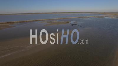 Pond Of Fangassier In Camargue, France, Video Drone Footage