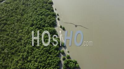 Fly At Seashore Full Of Mangrove Tree - Video Drone Footage