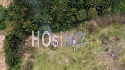 Oil Palm Trees Is Cut Down And Burn - Video Drone Footage