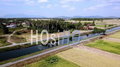 Aerial Fly Over Green Paddy Field - Video Drone Footage