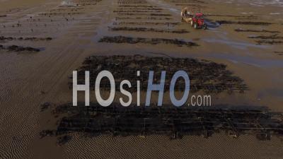 Production D'huitres De Noirmoutier Vidéo Drone