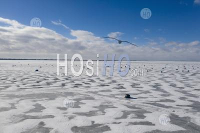 Ice Fishing Shelters - Aerial Photography