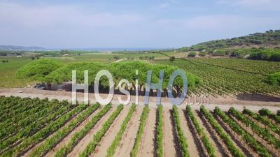 Aerial View Of Vineyard At Ramatuelle - Video Drone Footage