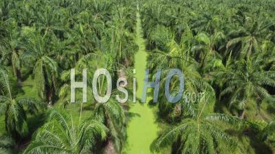 Aerial Fly Over Oil Palm Plantation With Algae Plant - Video Drone Footage