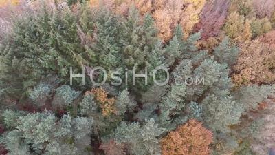 Forêt Bretonne En Automne, Vidéo Drone