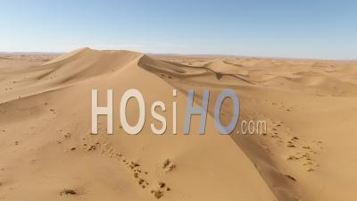 Juvenil Camel And His Mother In The Moroccan Desert - Video Drone Footage
