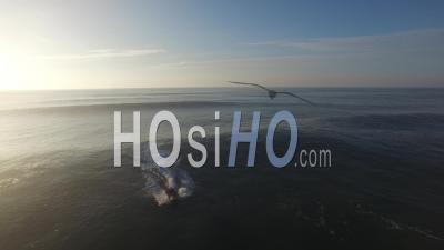 Woman Surfer On A Crest Of Ocean Wave In Backlight, Video Drone Footage